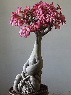 http://bonsai.webhitode.com/wp-content/uploads/2013/03/13.jpg